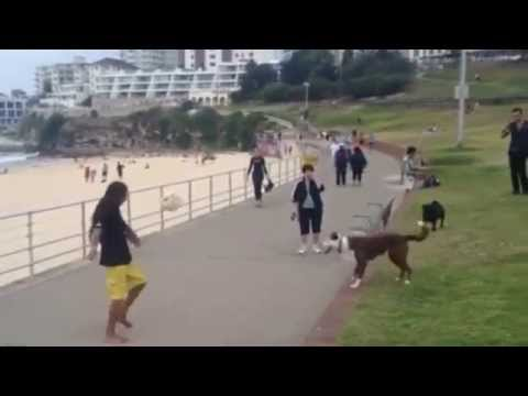 DOG PLAYING FOOTBALL IN BRAZIL