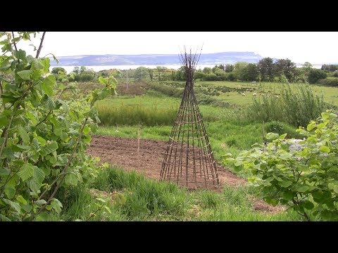 How to weave a garden obelisk