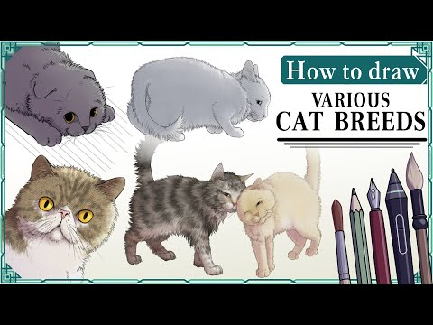 How to draw various CAT BREEDS - Mink's Tutorials