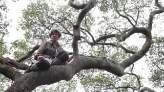 Lobos Creek - Coast Live Oak