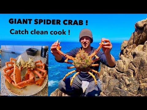 GIANT SPIDER CRAB - Catch Clean Cook , Steamed Spidercrab In Garlic & Spices