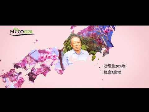 マイコジェルの | 経験 | サクラの木  [日本] Kimitec Group
