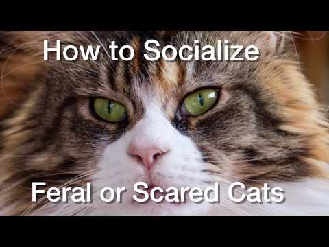 How to Socialize Feral or Scared Cats