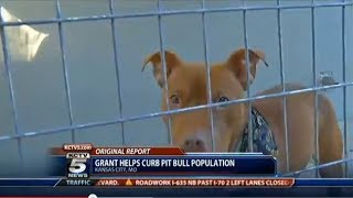 $100,000 Grant To Help Pit Bull Population Control In Kansas City