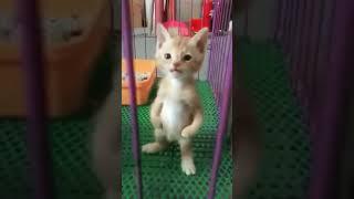 Маленький котёнок стоит на лапках и жалобно мяукает