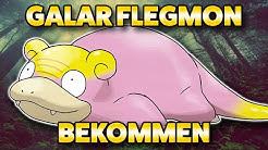 🐖 Galar Flegmon bekommen 🌳 Flegmon finden und fangen in PokemonSchild und Schwert 🍀 Attacken + PVP