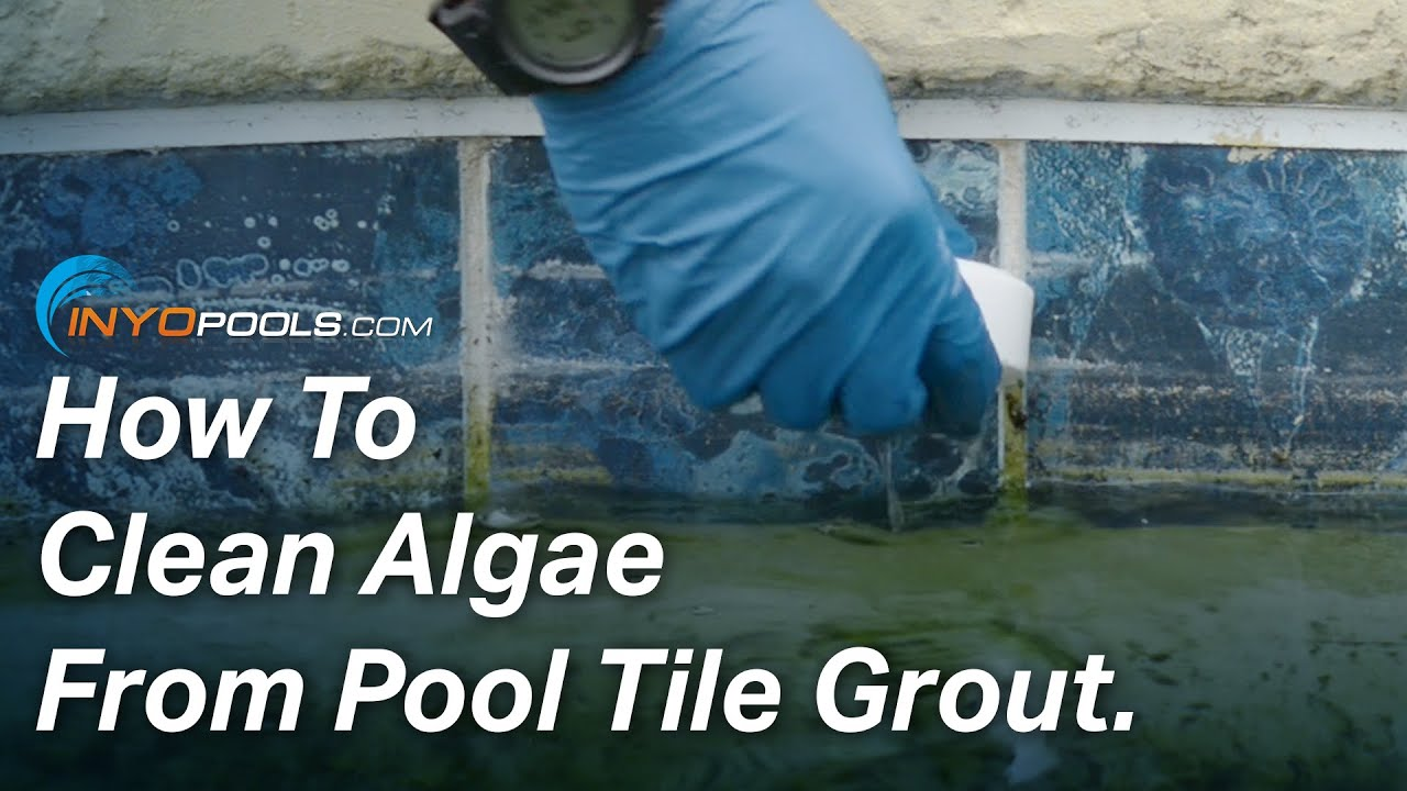 How To Clean Algae From Pool Tile Grout Youtube