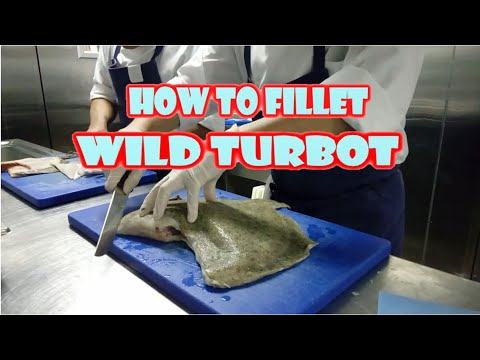HOW TO FILLET A WILD TURBOT FISH EASY STEPS