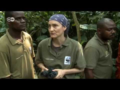 The bonobo - protecting forests, creating jobs | Global Ideas