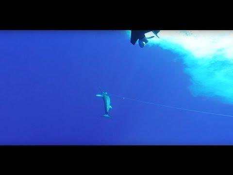 Epic swordfish, blackfin tuna, mahi-mahi and lobstering out of Hawks Cay Resort