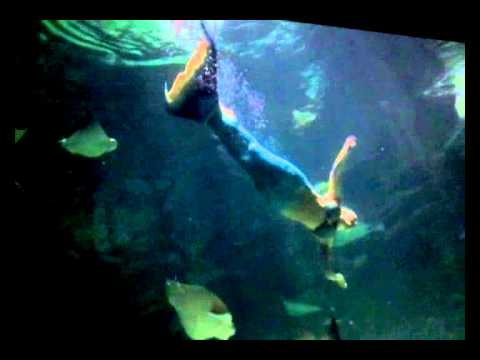 Mermaids At Ripley S Aquarium In Myrtle Beach