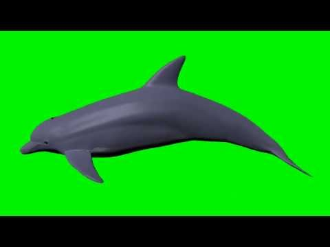 Green Screen Dolphin 3D - Swimming Cycle