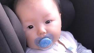 생후 146일째 | 곰돌이 같은 아기, 카시트에서 창문…