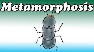 Metamorphosis by Franz Kafka (Summary and Review) - Minute Book Report
