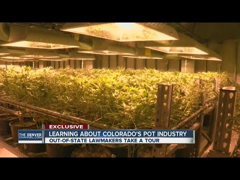 Colorado's cannabis industry draws out-of-state interest