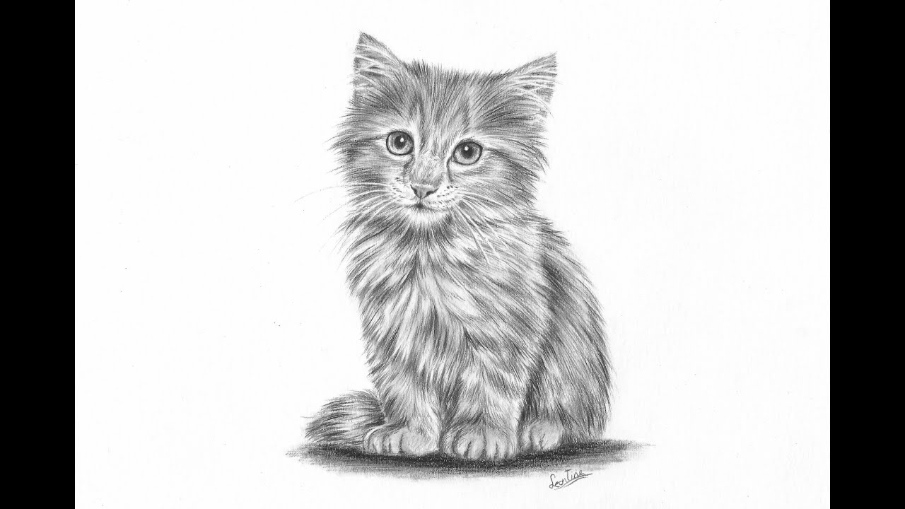 Uncategorized Draw Kitten how to draw a realistic kitten part 2 fur and details leontine van vliet