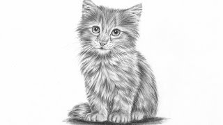 How to draw a realistic kitten part 2: Fur and details | Leontine van vliet