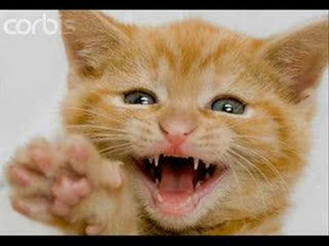 Do Cats And Dogs Lose Baby Teeth