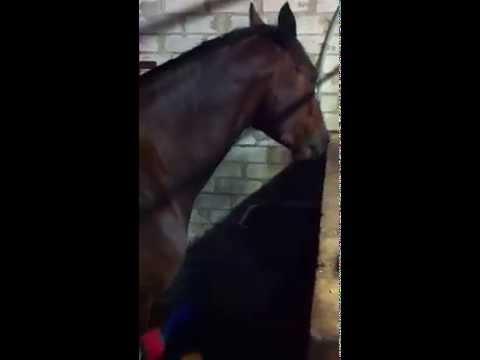 Poiss maiustab Cavalori