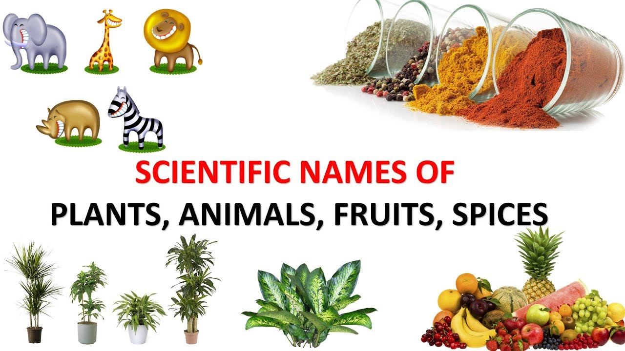 Learn Scientific Names Of Animals Plants Fruits Spices And Cerals