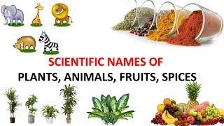 elephant scientific name
