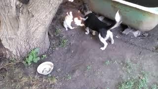 Мухтар и Ника одно целое или как дружба собаки защемила кошку...