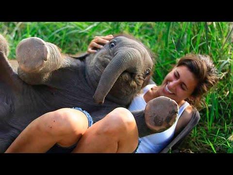 Смешные слонята: слоны приколы видео, купание слонов!