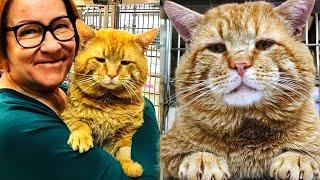Огромный бездомный кот попал в приют, и вскоре у него выяснилась одна интересная деталь