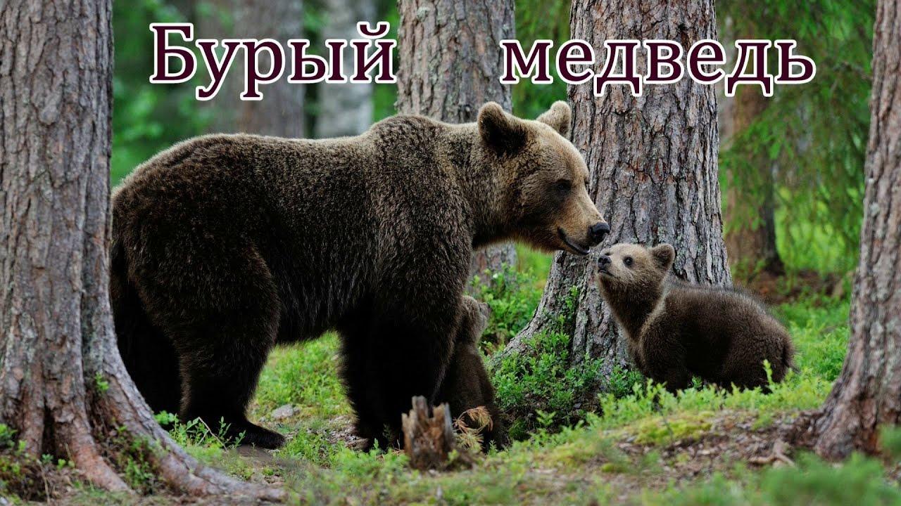 Голоса и звуки диких животных России для детей - YouTube