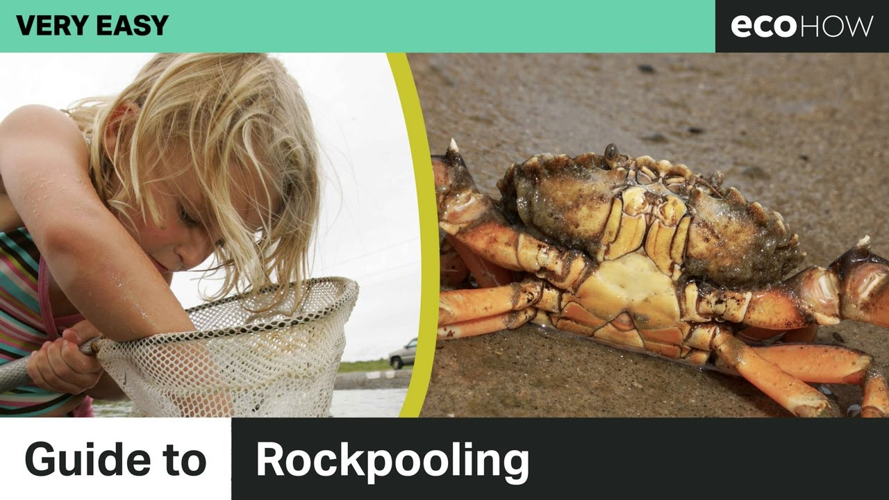Guide to Rockpooling