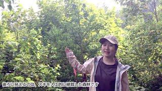 【農学部】岡野哲郎教授 城田徹央助教(造林学研究室)2021オープンラボ動画