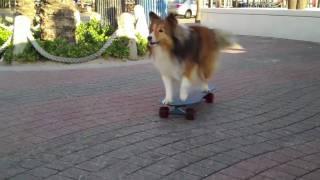 TWIG SKATES FORT LAUDERDALE - SPRING BREAK - Skateboarding Dog