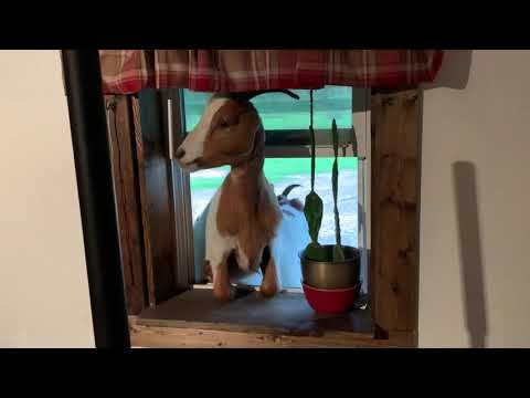 Peeping Tom - Clip from YouTube · Duration:  1 minutes 59 seconds