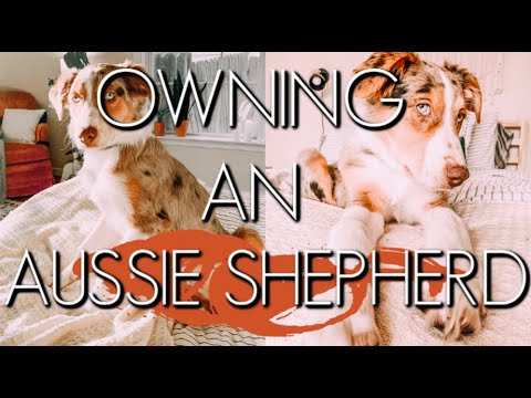 THE TRUTH ABOUT OWNING AN AUSTRALIAN SHEPHERD PUPPY🦴🐾