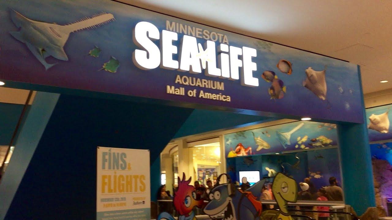 SEA LIFE Minnesota Aquarium in Mall of America - YouTube