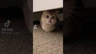 Cute cat return #cat #cute #viral #foryou