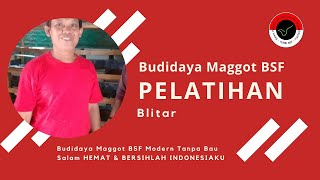 Budidaya Maggot BSF Modern Tanpa Bau (Terbukti Benar2 100% Tanpa Bau)