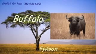 Дикие животные Африки. Животные в Саванне. Часть 2. Английский язык для детей.
