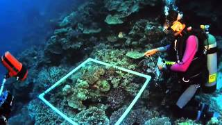 Coral Reef Official Trailer