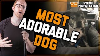 Steve Hofstetter and his adorable dog Walter