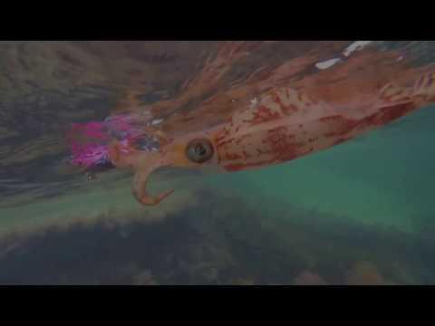 Squid Fishing At Point Peron(Cape Peron)/// Snorkel