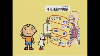 NiKK(にっく)映像の学習DVD「わかるよ! 体のしくみ 小学生の理科」の...