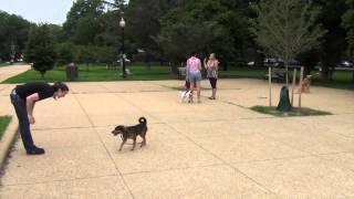 Camp Day #14: Mastering Major Dog Distractions