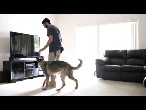 How to teach the sit command - HouseholdK9.com