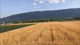 うきは市の麦畑「麦秋の秋」