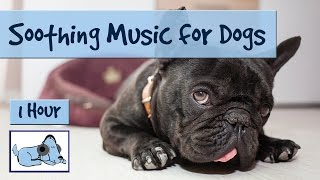 Relax Your Dog, Perfect for Dogs with Breathing Difficulty! 2 heures de musique relaxante de chien.