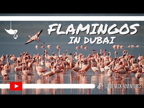 Free Flamingos in Dubai | 2019 | Zak & Aisha