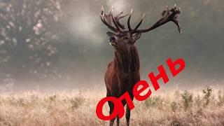 Каких Животных Присылают Нам «Сверху» и о чем говорит Такая Встреча!