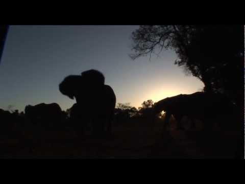 Elephant Sunset - Mandarin