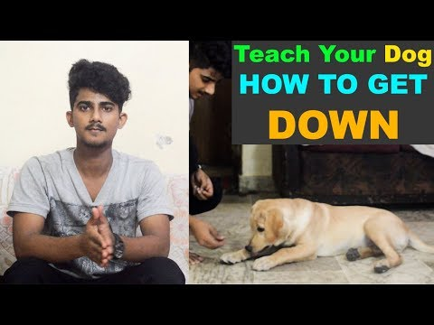 """Teach Your Dog, How To Get """" DOWN"""" : Dog Training Videos : TUC"""